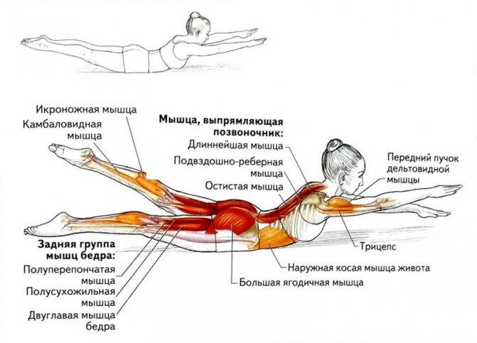 При отработке спортсменами плавательных движений на суше задействуется множество мышц